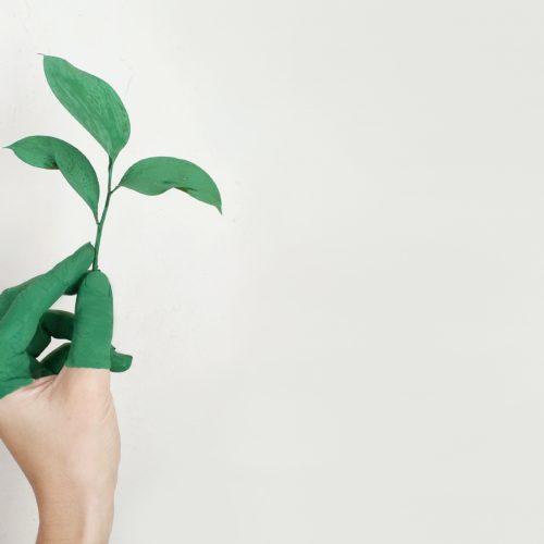 new sustainable insurers with wenalyze